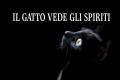 Un essere che vive a cavallo tra la realtà umana e l'aldilà: Il Gatto