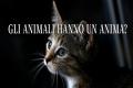 Gli animali hanno un'anima o spirito come noi?