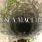 Musca Macedda: Una strana creatura della mitologia sarda